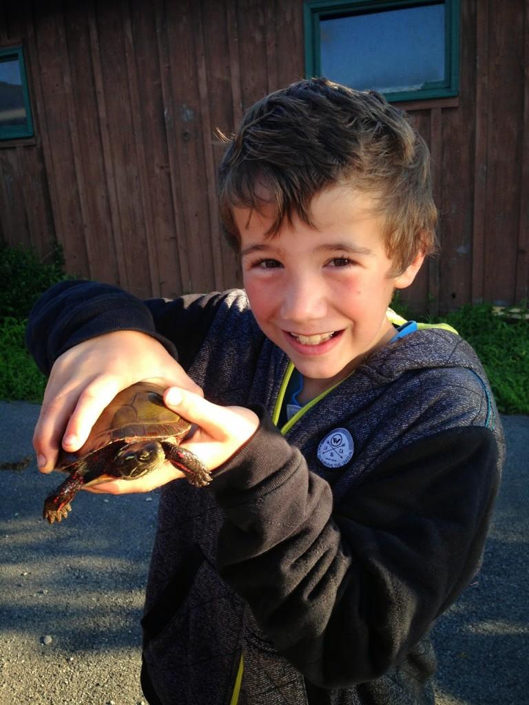 nature turtle